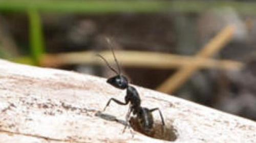 Lección de vida: Ve a la hormiga