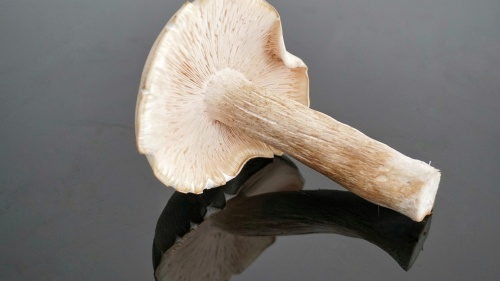 ¿Dios creó los hongos para que pudieramos consumirlos?