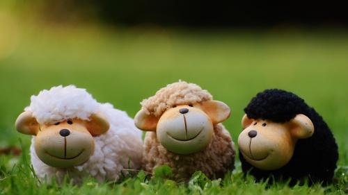 """""""Sé diligente en conocer el estado de tus ovejas, y mira con cuidado por tus rebaños"""""""
