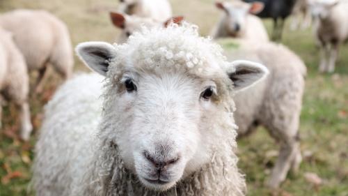 Debemos ser una oveja que busca el buen pastor, esa tiene que ser nuestra definición.