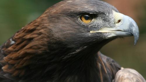 ¿Qué quiso decir Jesús en Lucas 17:37 acerca de las águilas reunidas alrededor del cuerpo?