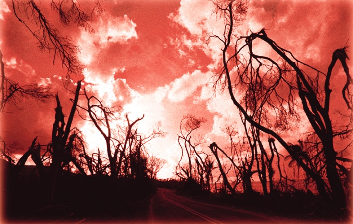 Burnt trees along the side of road with a red sky.