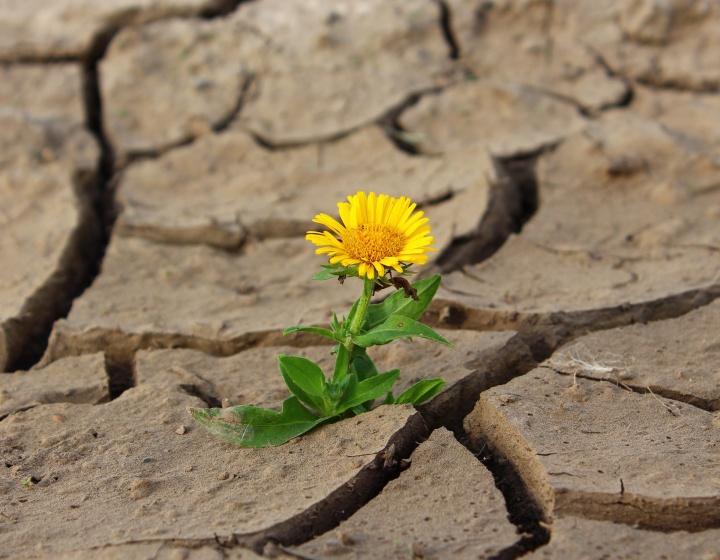 Cuando Dios nos pone frente a algo que nos parece difícil, es porque sabe que por ese camino tenemos que ir para alcanzar sus promesas gloriosas.