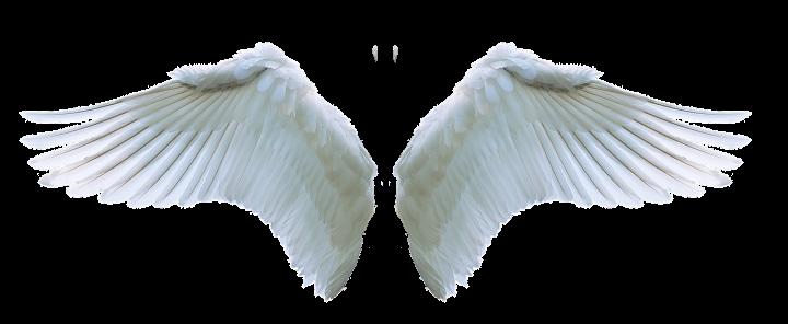 Curiosamente, la Biblia muestra que también hay diferentes clasificaciones de ángeles — ¡no son todos iguales!