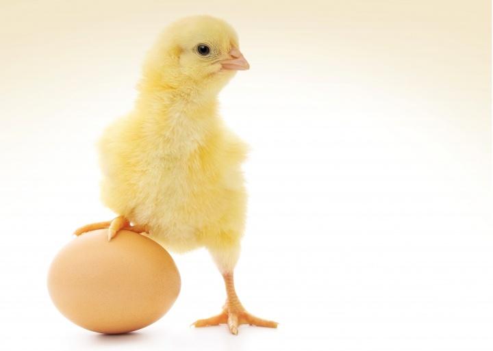 otro gran ejemplo de previsión en la naturaleza es la humilde cáscara de huevo. Desde el mismo comienzo, muchos problemas deben ser resueltos para que el polluelo en desarrollo sobreviva las tres semanas de incubación dentro del huevo.