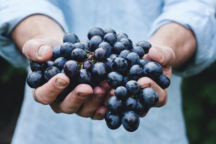 Cómo dar fruto incluso en la vejez
