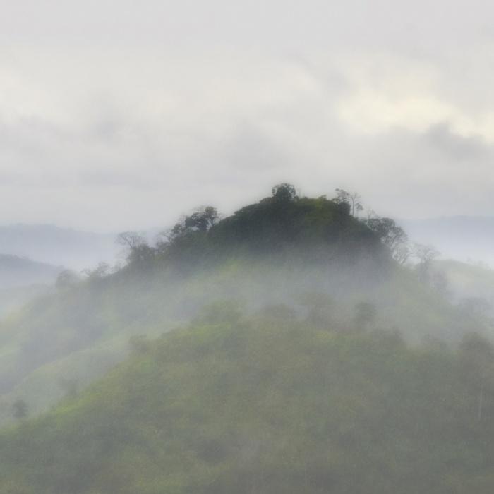 Rain forest fog